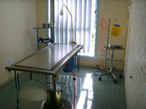 Surgery room at Eden Veterinary Clinic